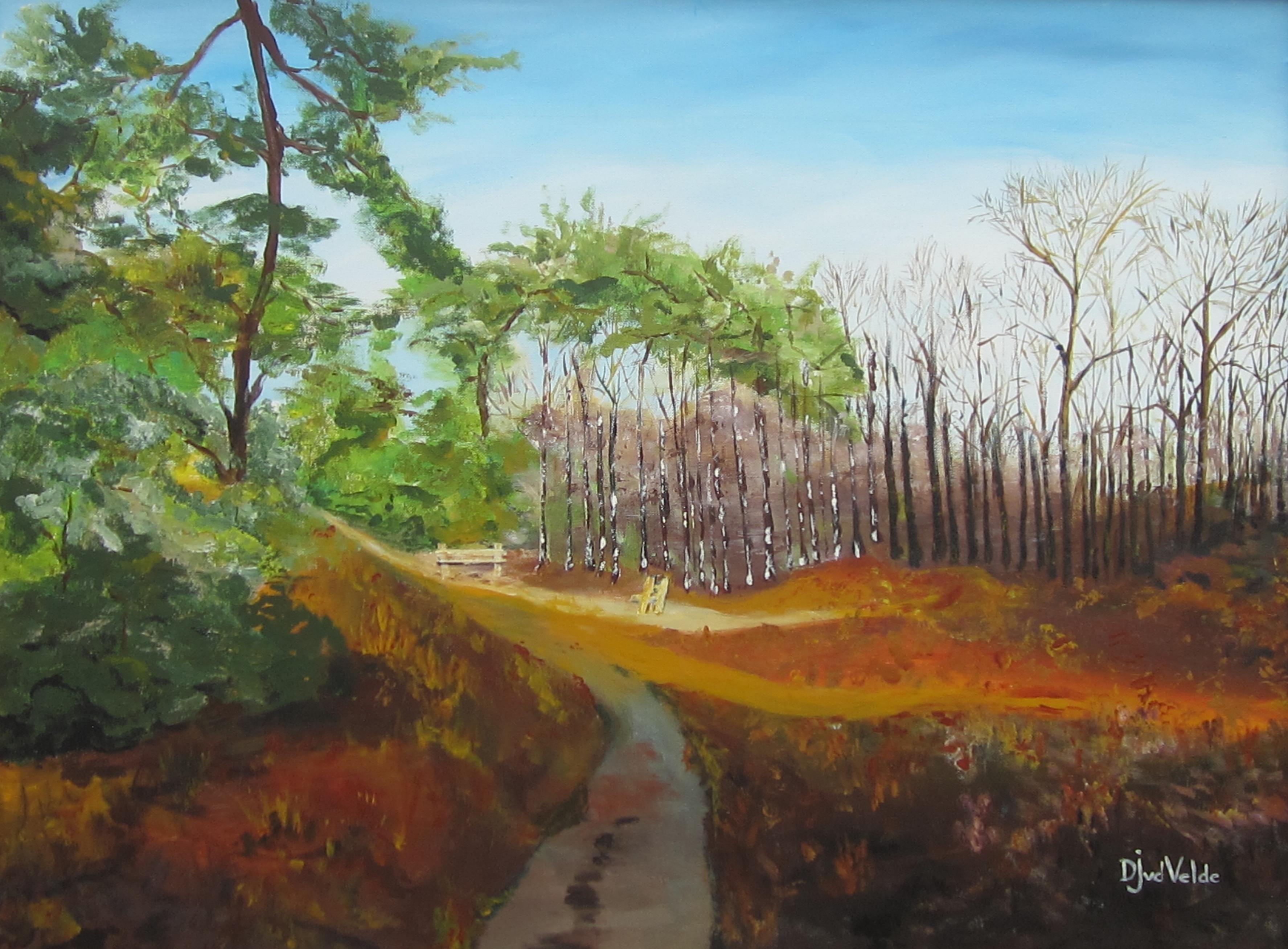 het lunterse buurtbos